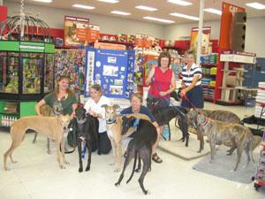 Golden state greyhound adoption rescue organization greyhound adoption rescue organization m4hsunfo